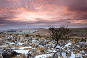 Windswept tree on Belstone Tor after a light dusting of snow