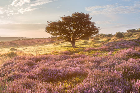 Gallery of my Exmoor images